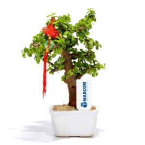 עץ השפע למתנה