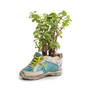 עציץ בעיצוב נעל למתנה